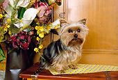 DOG 02 RK0362 05