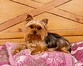 DOG 02 RK0365 03