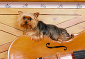 DOG 02 RK0366 03