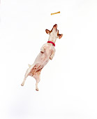DOG 02 RK0409 01