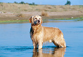 DOG 03 CB0012 01