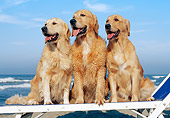 DOG 03 CB0014 01