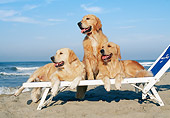 DOG 03 CB0015 01