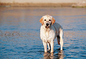 DOG 03 CB0018 01