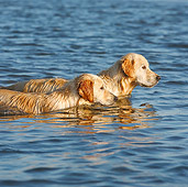 DOG 03 CB0023 01