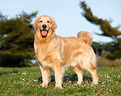 DOG 03 CB0030 01