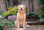DOG 03 CE0019 01