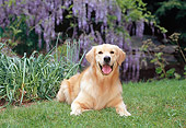 DOG 03 CE0020 01