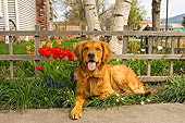 DOG 03 DB0026 01