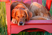 DOG 03 DB0102 01