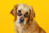DOG 03 JD0003 01