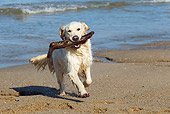DOG 03 JE0011 01