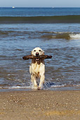 DOG 03 JE0014 01