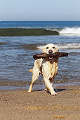 DOG 03 JE0015 01
