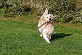 DOG 03 JE0020 01