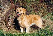 DOG 03 JN0002 01