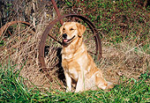 DOG 03 JN0006 01