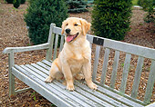 DOG 03 JN0008 01
