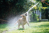 DOG 03 JS0007 01