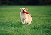 DOG 03 KH0018 01