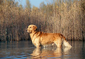 DOG 03 KH0021 01