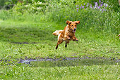 DOG 03 LS0062 01
