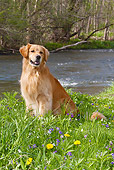 DOG 03 LS0065 01