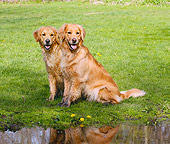 DOG 03 LS0066 01