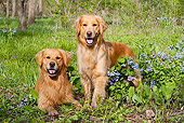 DOG 03 LS0068 01