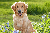 DOG 03 LS0070 01