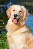 DOG 03 LS0073 01