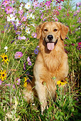 DOG 03 LS0075 01
