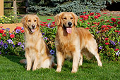DOG 03 LS0078 01
