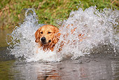 DOG 03 LS0079 01