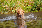 DOG 03 LS0080 01