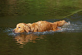 DOG 03 LS0081 01