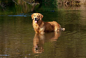 DOG 03 LS0083 01