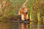DOG 03 LS0085 01