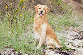 DOG 03 LS0092 01