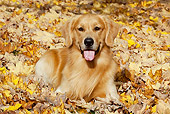 DOG 03 LS0095 01