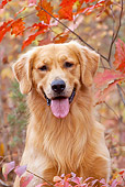 DOG 03 LS0096 01