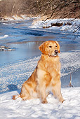 DOG 03 LS0098 01