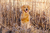 DOG 03 LS0101 01