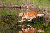 DOG 03 LS0106 01