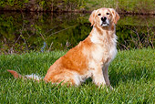DOG 03 LS0107 01