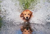 DOG 03 LS0108 01