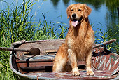 DOG 03 LS0111 01