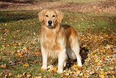 DOG 03 LS0113 01