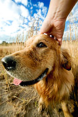 DOG 03 MH0003 01