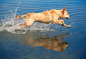 DOG 03 MH0004 01